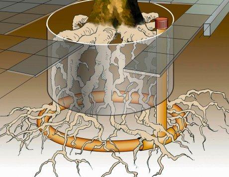 מערכות תת קרקעיות לאוורור השורשים