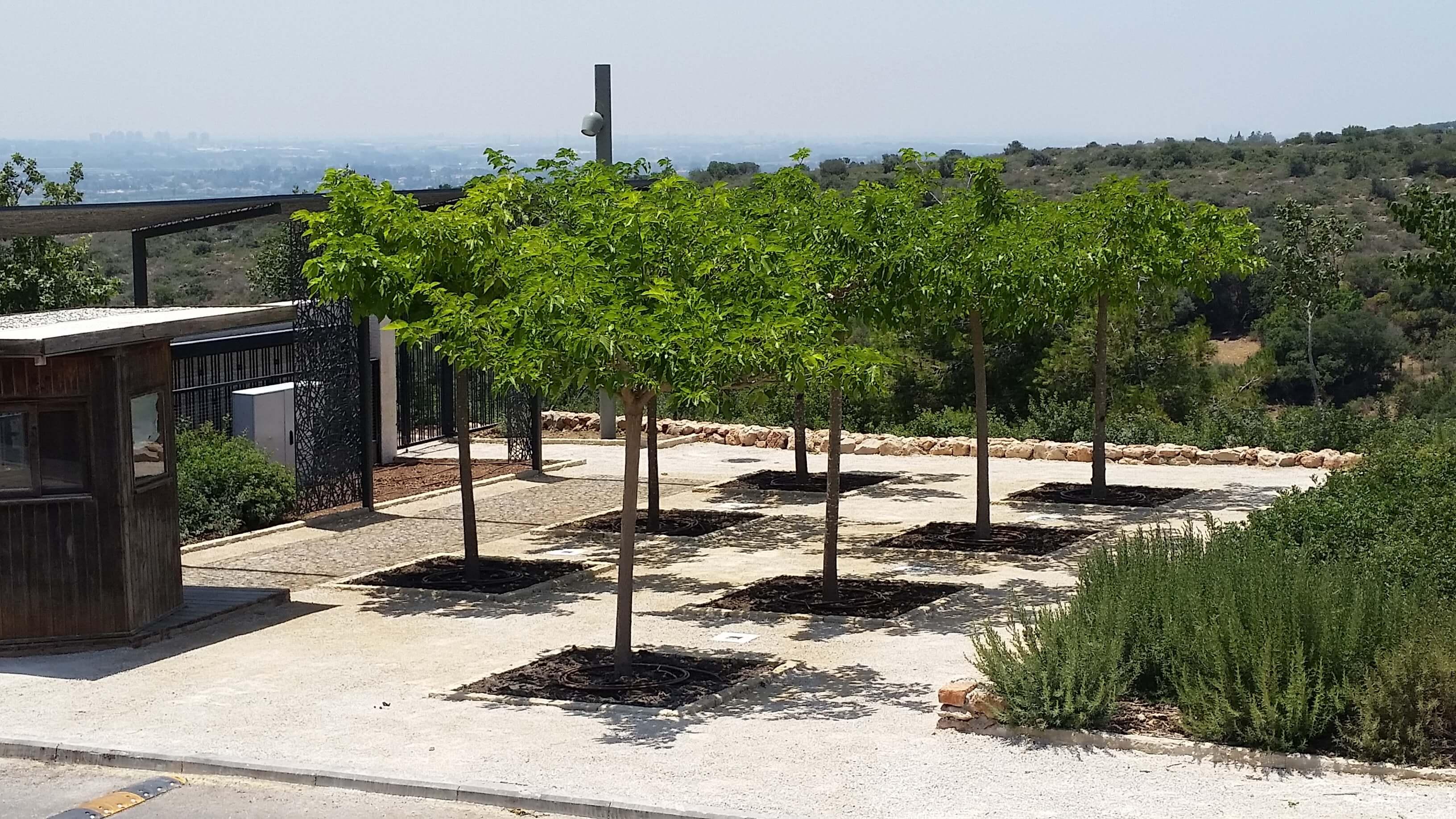 רחבת עצי התות