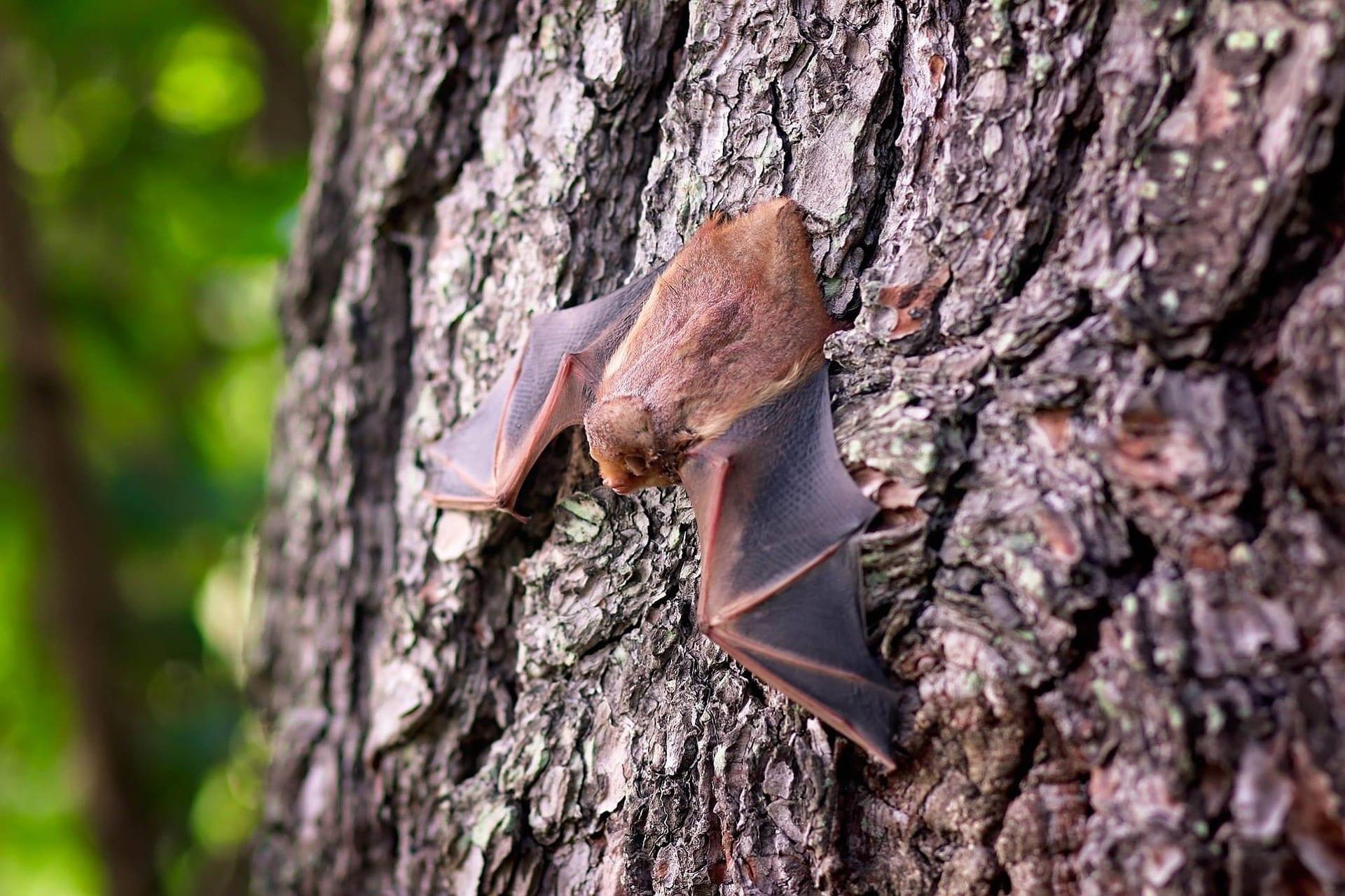 bat-1695186_1920