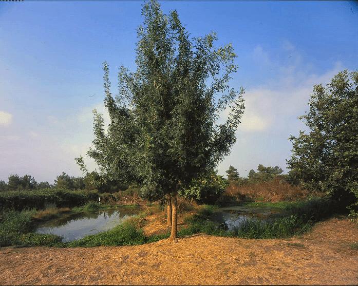 שביל המעיין - בריכה אקולוגית
