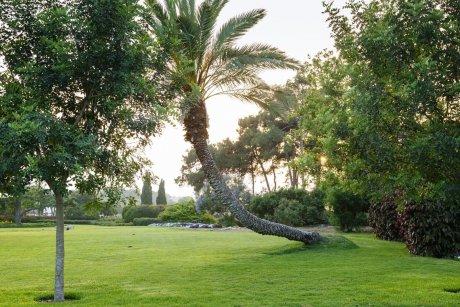 עץ דקל ומדשאות הגן