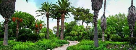 גן הדקלים
