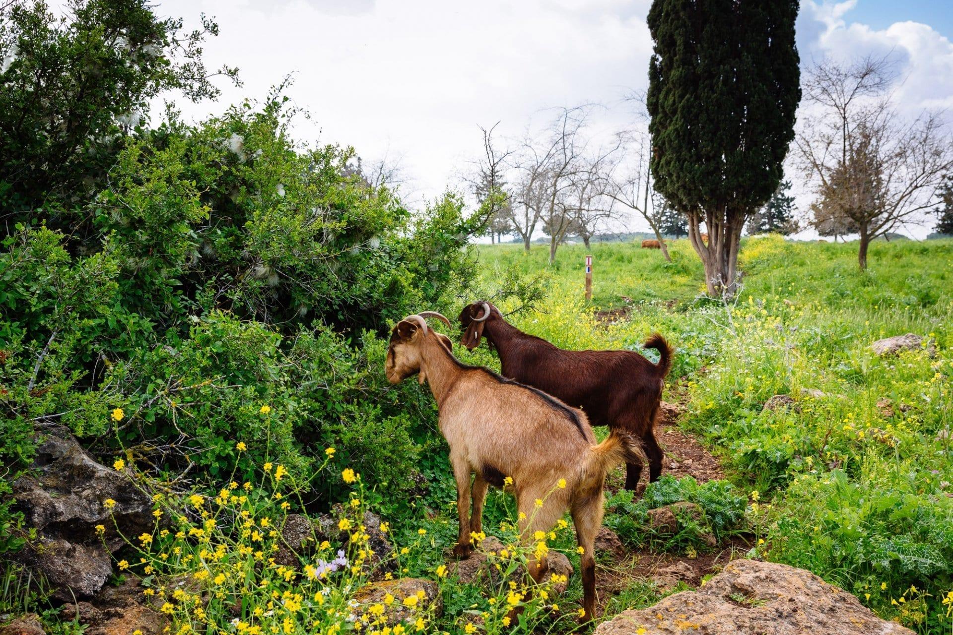 Ramat Hanadiv Nature Park, Israel.