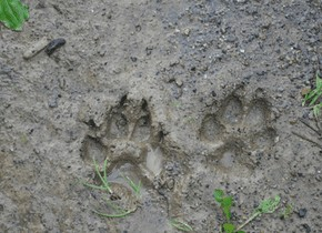 footprinttrack.png