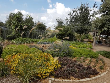 הגינה הטיפולית ברמת הנדיב