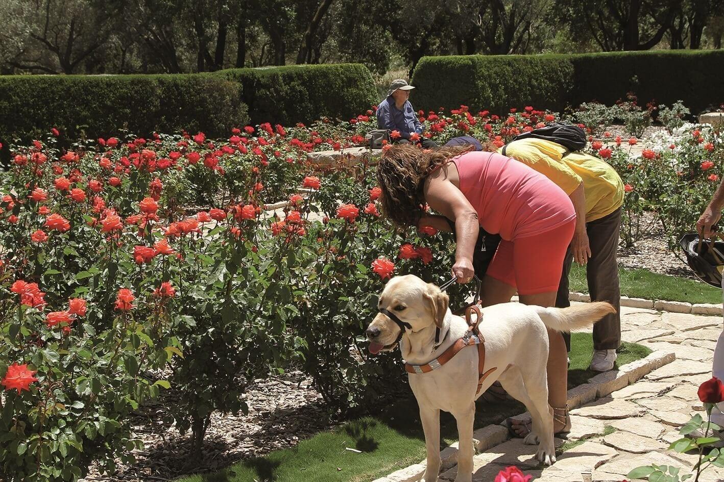 לקויי ראייה עם כלב נחייה בגן הוורדים