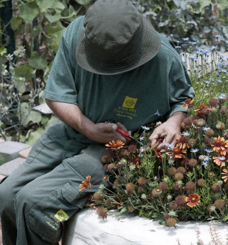 מטופל בגינה הטיפולית
