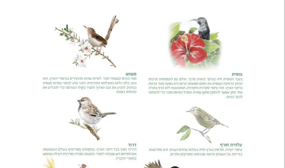 ציפורים-בגני2ם-aspect-ratio-127.2x75