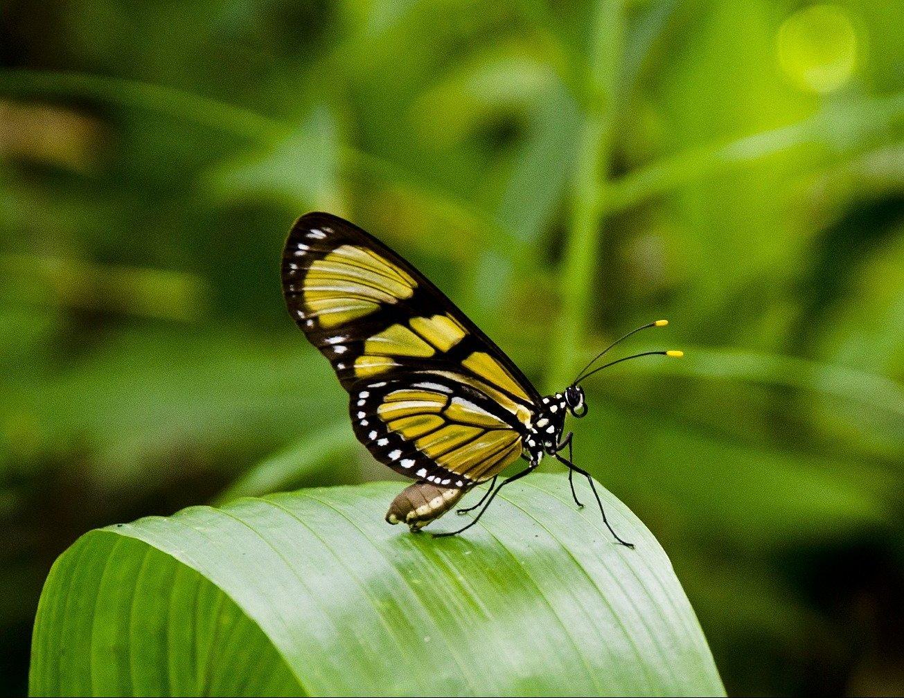 butterfly-404731_1920