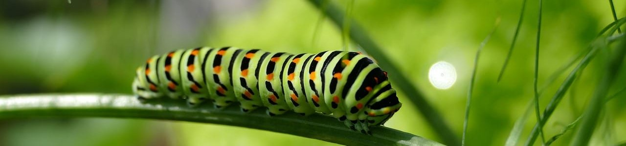 caterpillar-2604350_1280-aspect-ratio-x