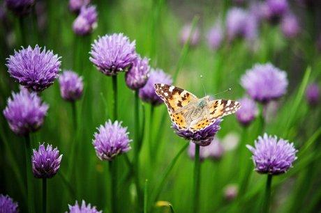 flower-4253120_1920
