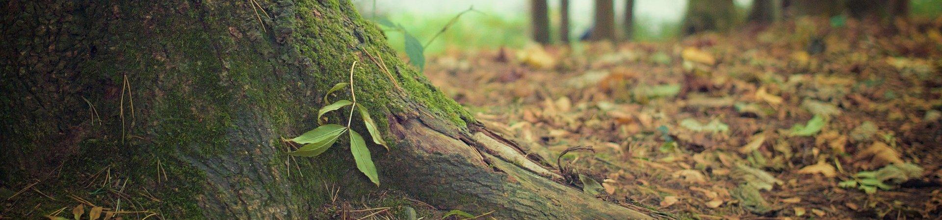 tree-trunk-569275_1920-aspect-ratio-x