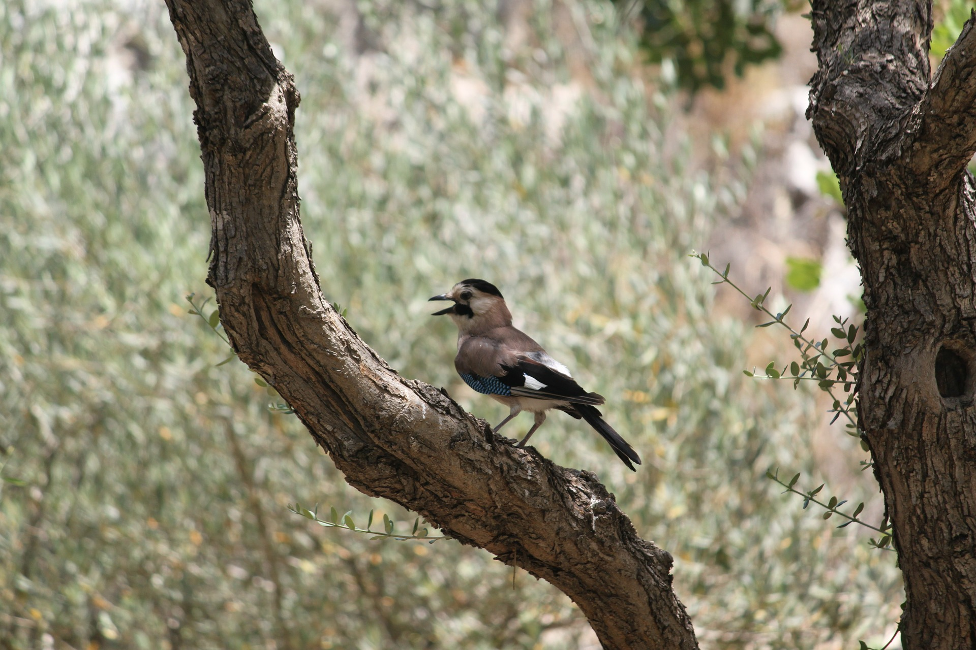 bird-206318_1920