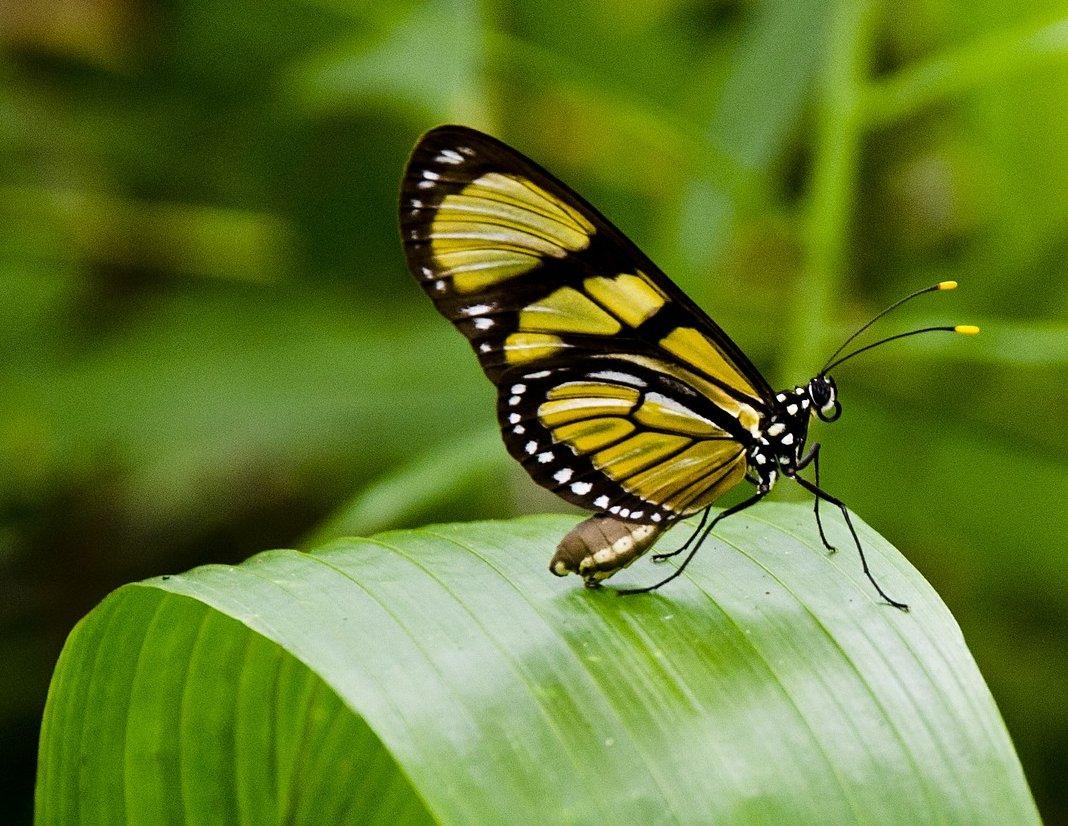 butterfly-404731_1920-aspect-ratio-46x35.6