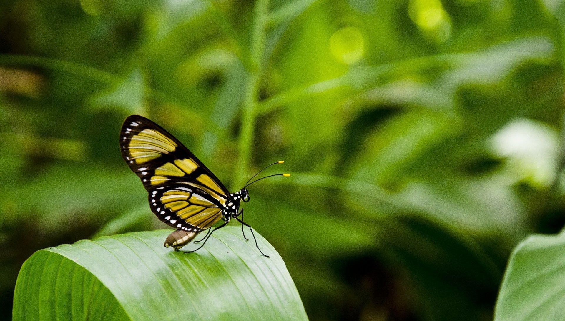 butterfly-404731_1920-aspect-ratio-95x54
