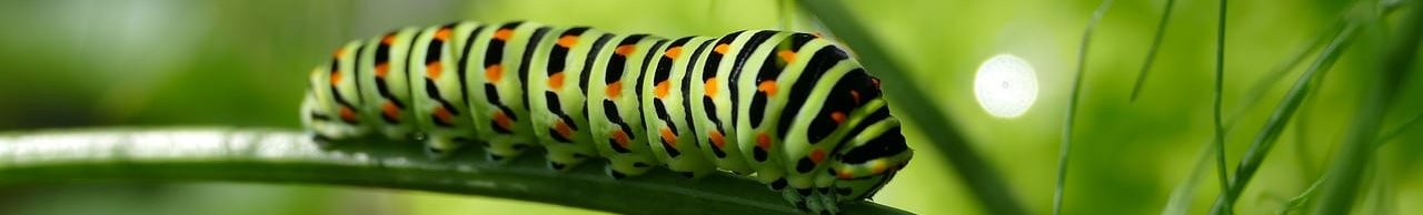 caterpillar-2604350_1280-aspect-ratio-192x29.1