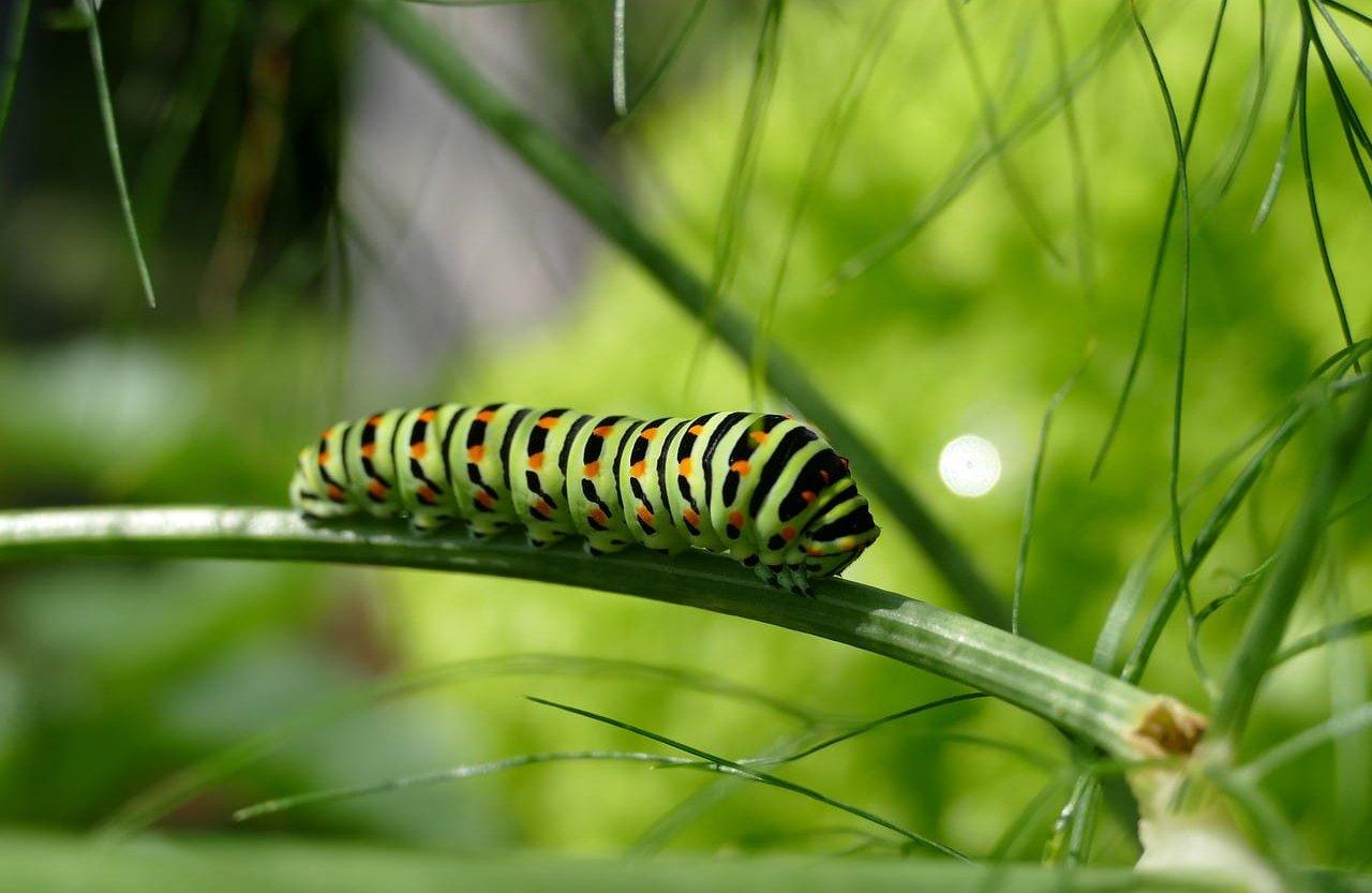 caterpillar-2604350_1280-aspect-ratio-3.75x2.44