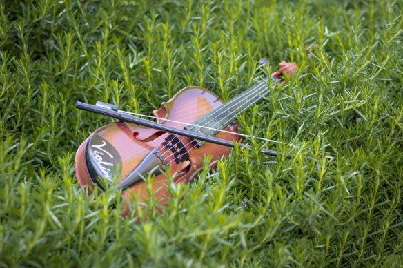 violin-5548761_1920 (1)