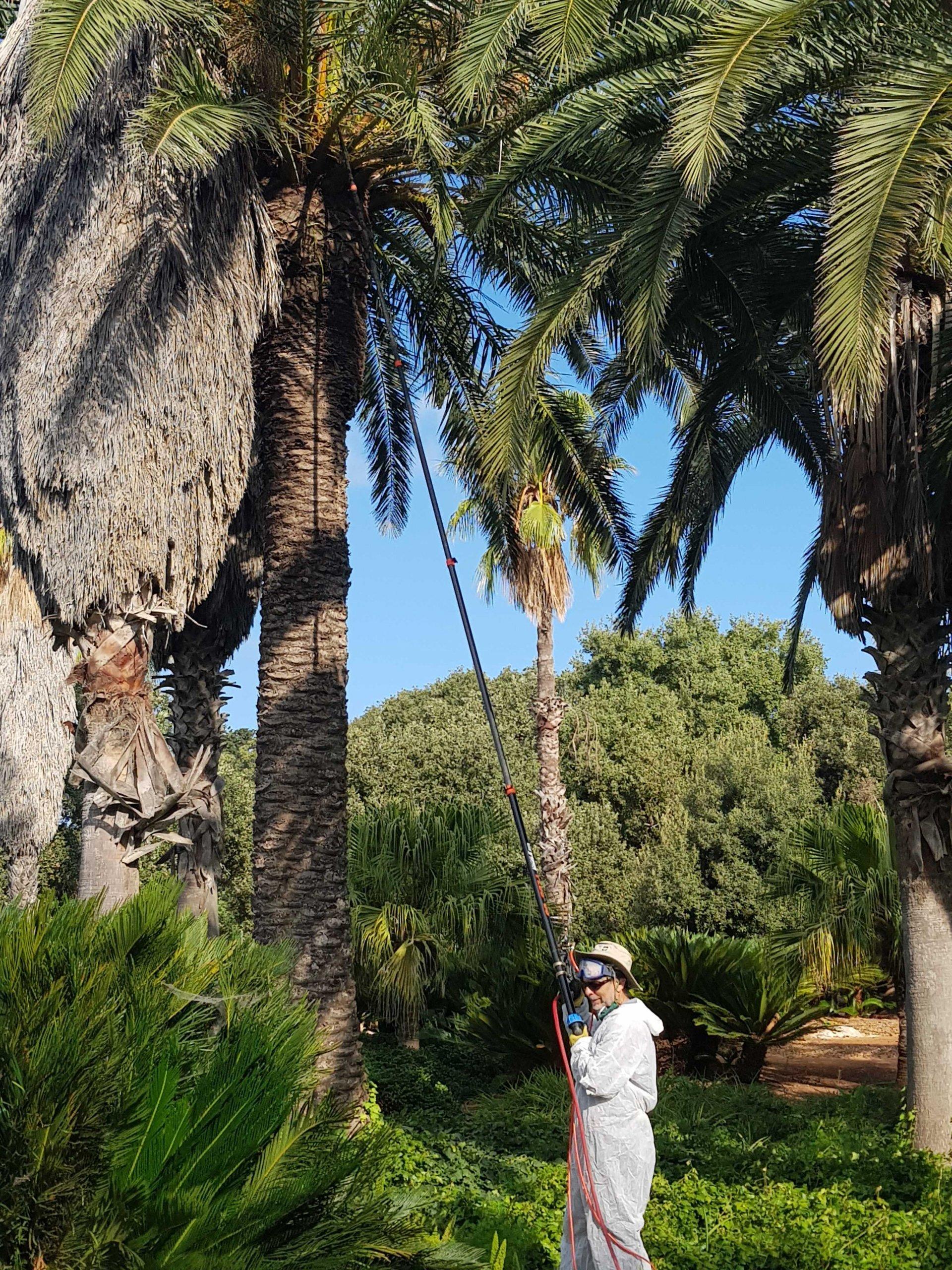 palm treatment2