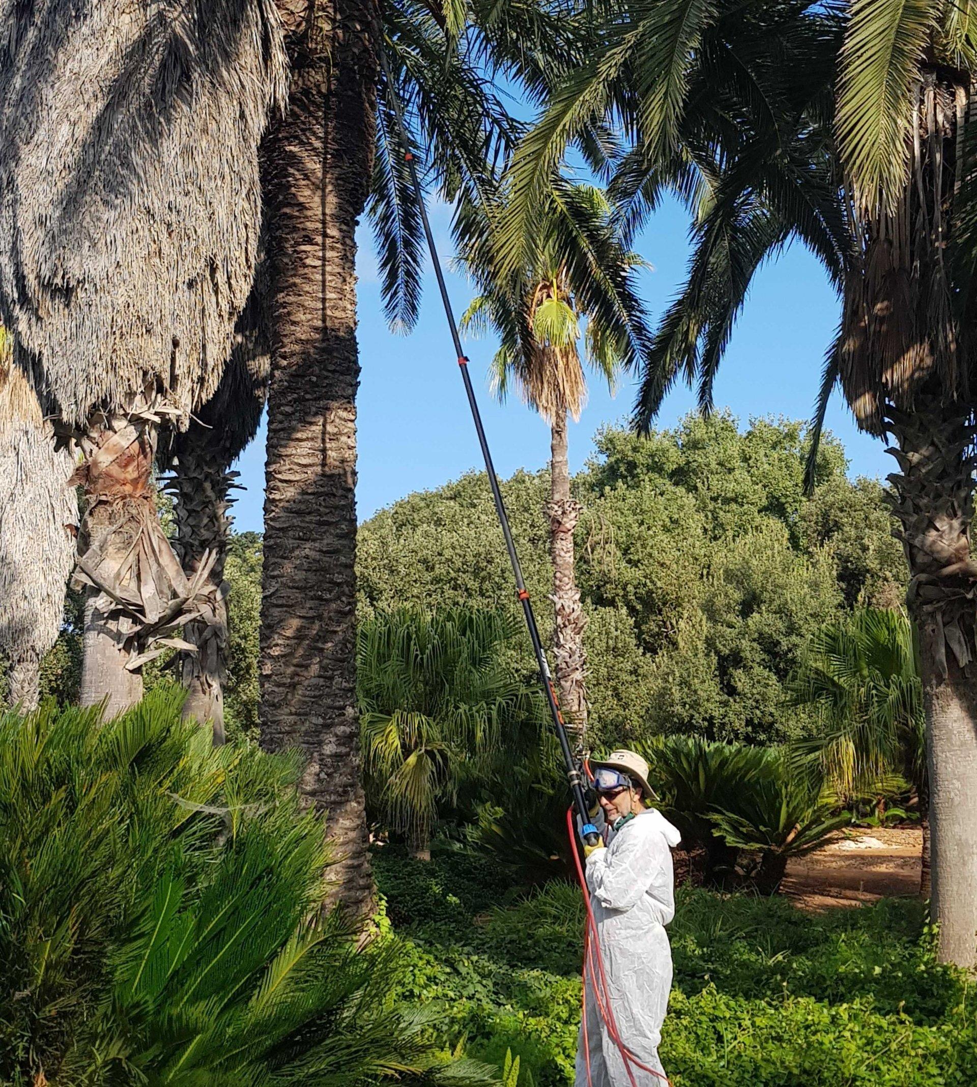 palm-treatment2-e1592127204877-aspect-ratio-x