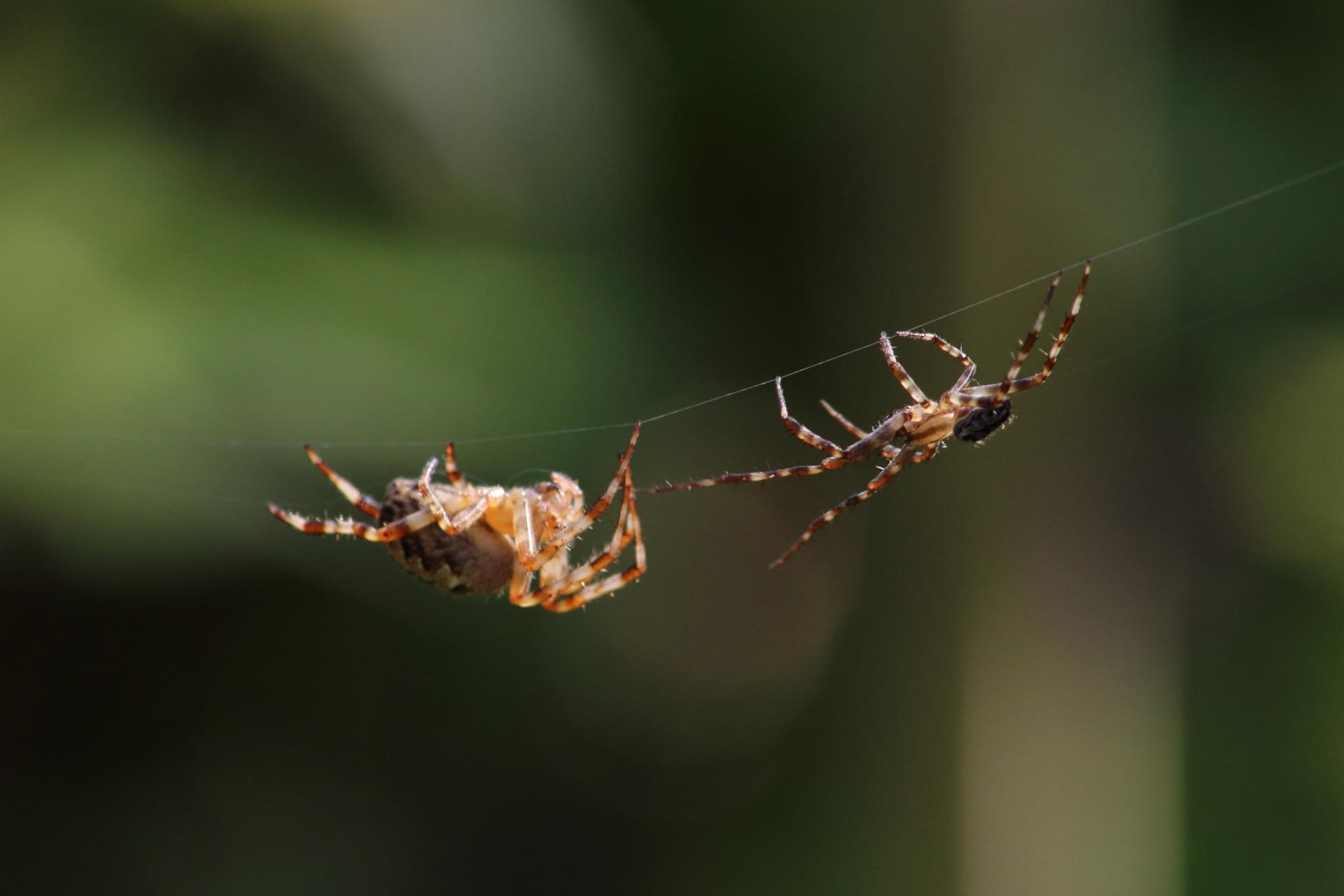 spider-3103760