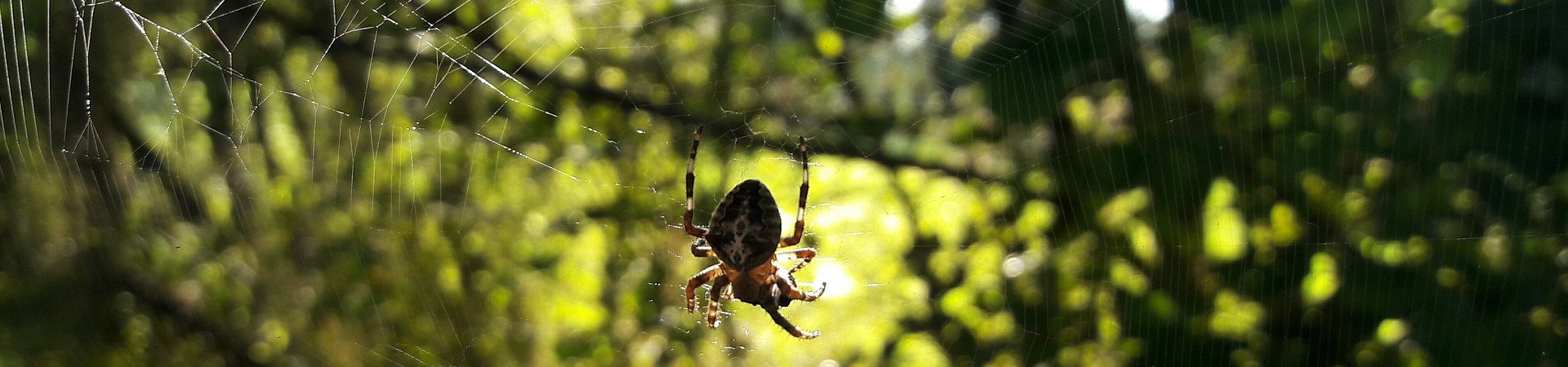 spider-4295682_1920-aspect-ratio-x